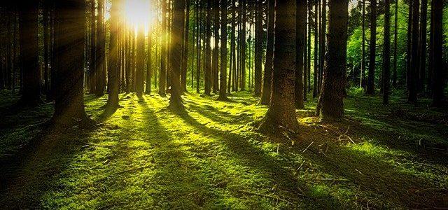 ΥΠΕΝ: 79 εκ. ευρώ για πρόληψη και αποκατάσταση ζημιών σε δάση